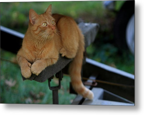 5-toe'd Orange Cat Of The Marina Metal Print