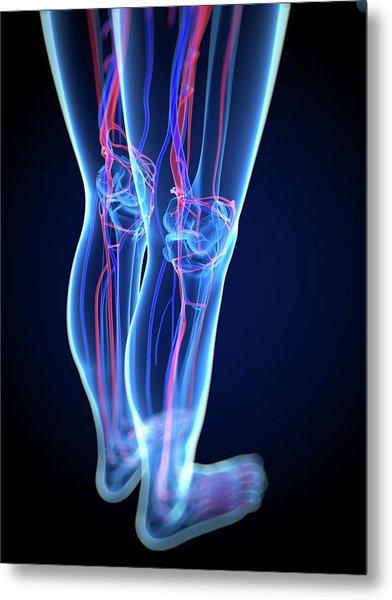 Vascular System, Artwork Metal Print by Sciepro