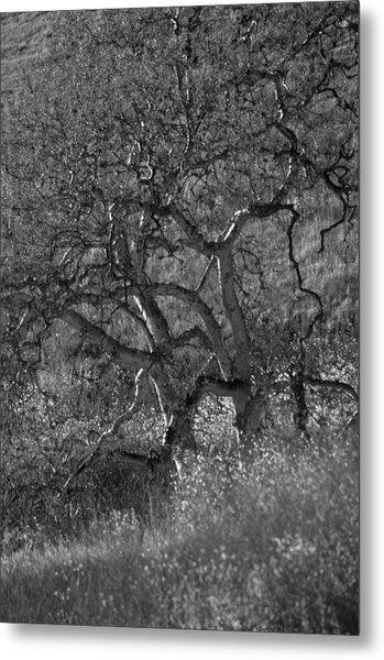 50 Shades Of Gray Trees Metal Print