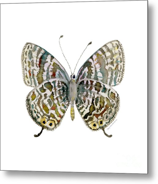 51 Lang's Short-tailed Blue Butterfly Metal Print