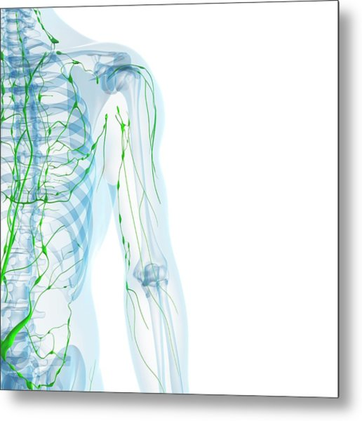 Lymphatic System Metal Print by Sciepro/science Photo Library