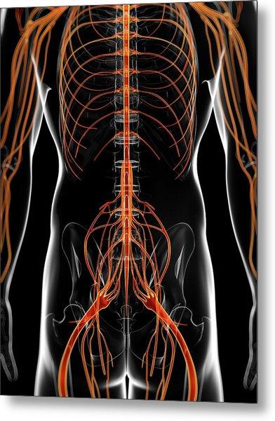Human Nervous System Metal Print by Sebastian Kaulitzki
