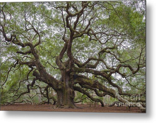 Sc Angel Oak Tree Metal Print