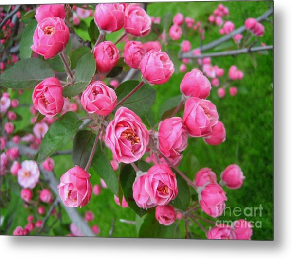 Color Of The Spring Metal Print