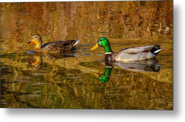 Mallard Ducks Metal Print by Brian Stevens