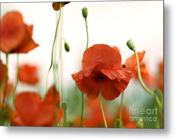 Red Poppy Flowers Metal Print
