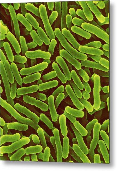Salmonella Enterica Metal Print by Dennis Kunkel Microscopy/science Photo Library