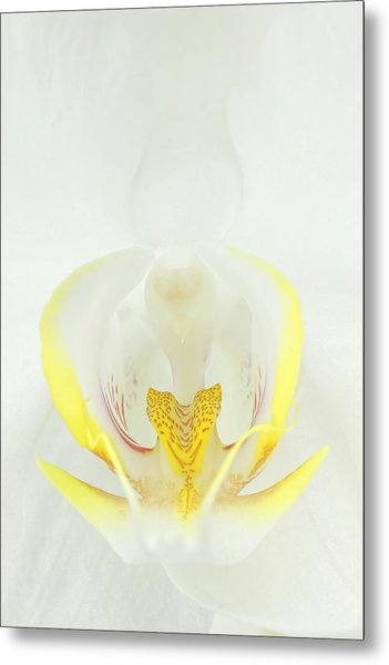 White Orchid-3 Metal Print