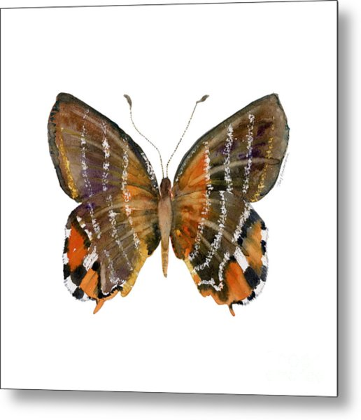60 Euselasia Butterfly Metal Print