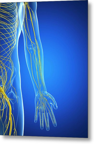 Nervous System Metal Print by Sciepro/science Photo Library