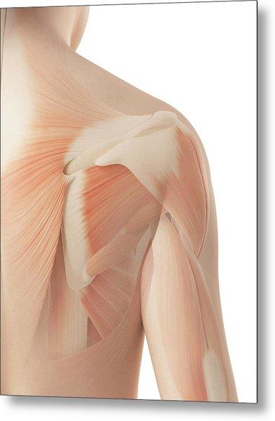 Human Shoulder Muscles Metal Print by Sebastian Kaulitzki