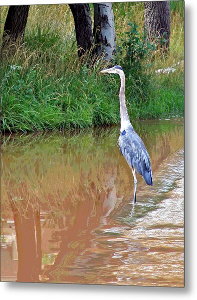 Blue Heron On The East Verde River Metal Print