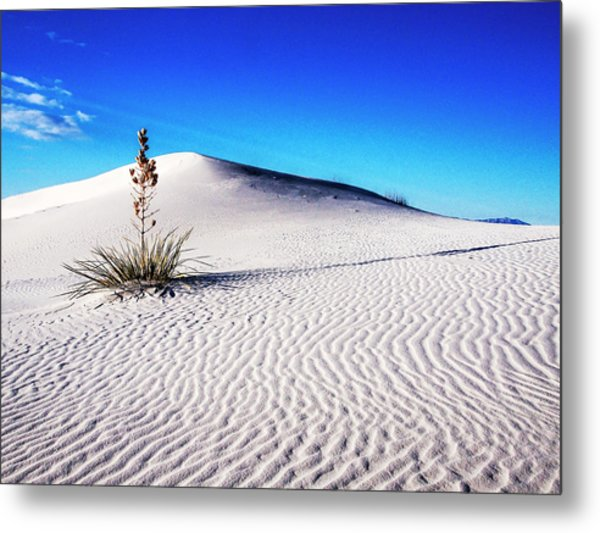 Usa, New Mexico, White Sands National Metal Print by Terry Eggers