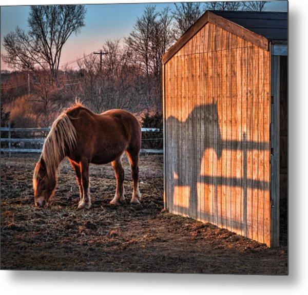 7056 Horse Shadow Metal Print by Deidre Elzer-Lento
