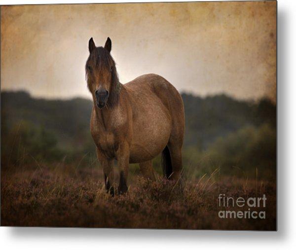 New Forest Pony Metal Print by Angel Ciesniarska