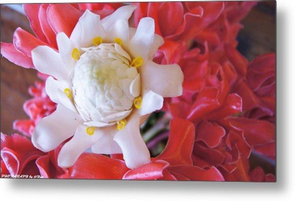 Flower For You  Metal Print by Gornganogphatchara Kalapun