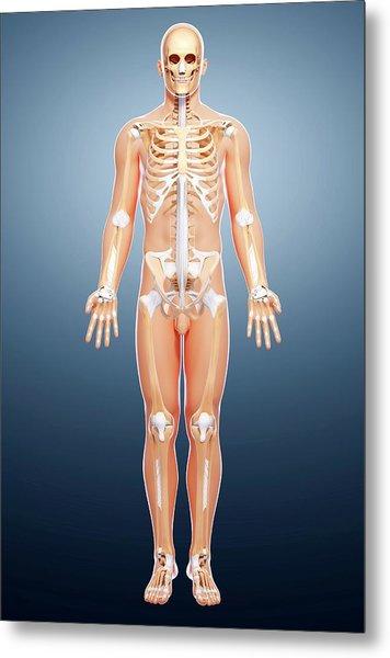 Male Skeleton Metal Print by Pixologicstudio/science Photo Library