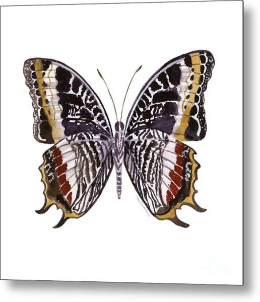 88 Castor Butterfly Metal Print