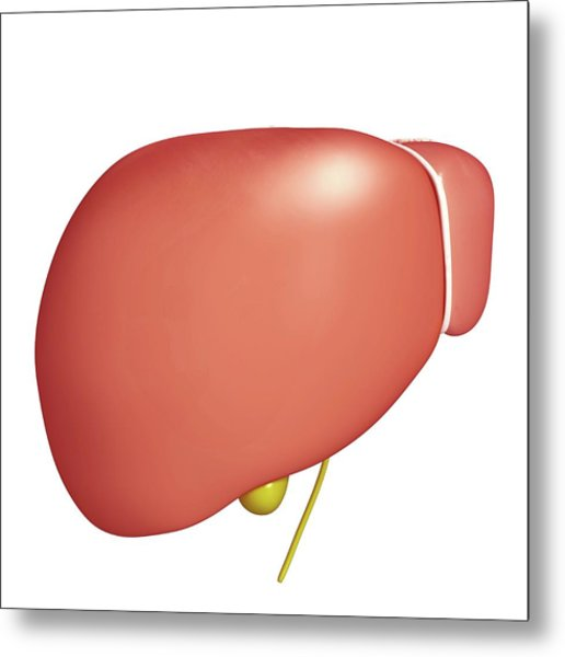 Healthy Liver Metal Print by Pixologicstudio/science Photo Library