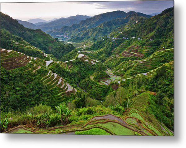 The Rice Terraces Of The Philippine Metal Print