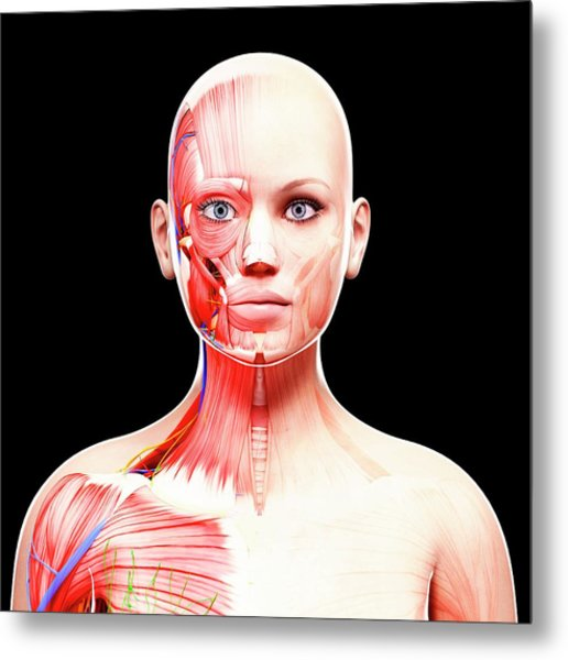Female Anatomy Metal Print by Pixologicstudio/science Photo Library