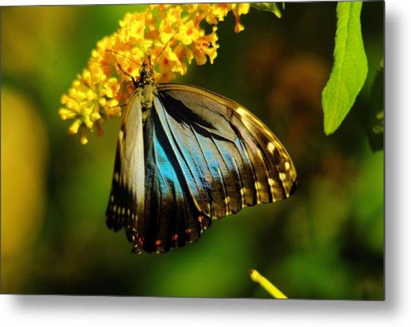 A Beautiful Butterfly Metal Print