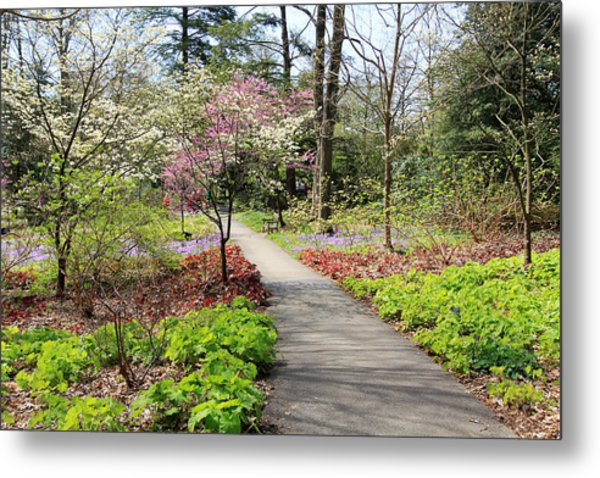 A Beautiful Spring Walk Metal Print