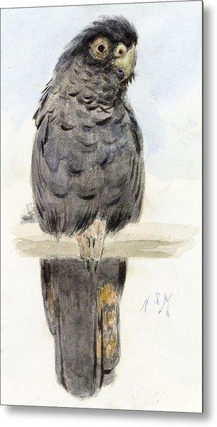 A Black Cockatoo Metal Print