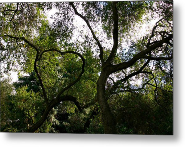 A Bough To Your Heart Metal Print