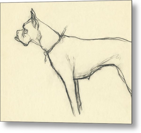 A Boxer Dog Metal Print