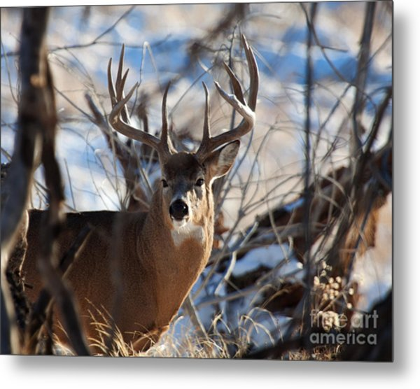A Buck In The Bush Metal Print