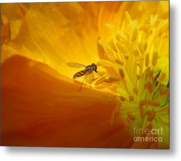 A Bug And A Green Inner Glow Metal Print