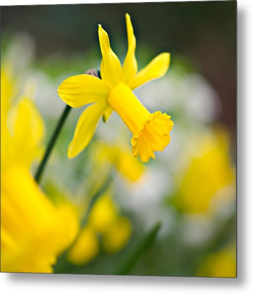 A Burst Of Spring Metal Print