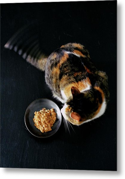 A Cat Beside A Dish Of Cat Food Metal Print