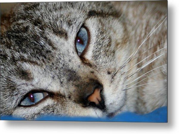 A Cat Named...blue Metal Print