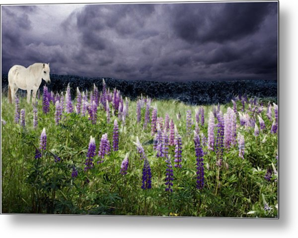 A Childs Dream Among Lupine Metal Print
