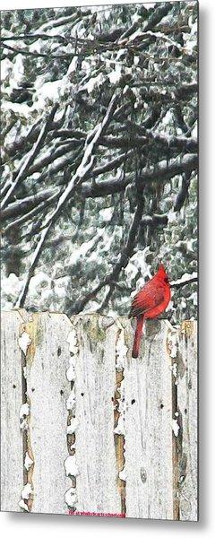 A Christmas Cardinal Metal Print