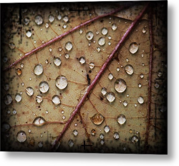 A Close Up Of A Wet Leaf Metal Print by Andrew Sliwinski