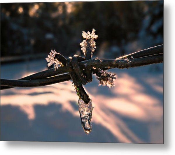 A Cold Welcome Metal Print