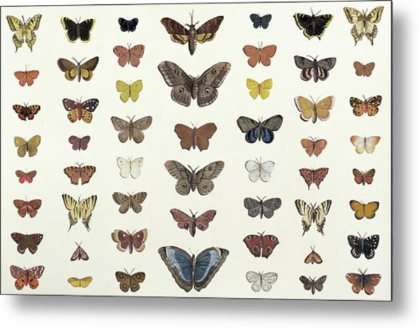 A Collage Of Butterflies And Moths Metal Print