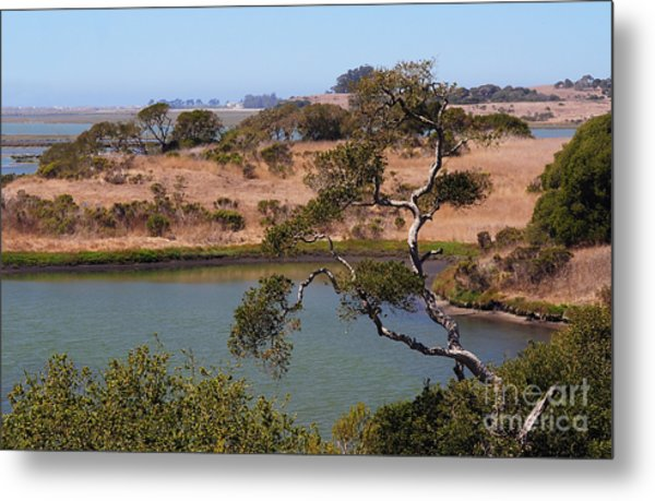 A Cove In Late Summer At Elkhorn Slough Metal Print