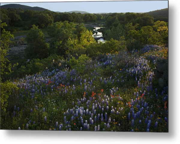A Creek In Llano County  Metal Print