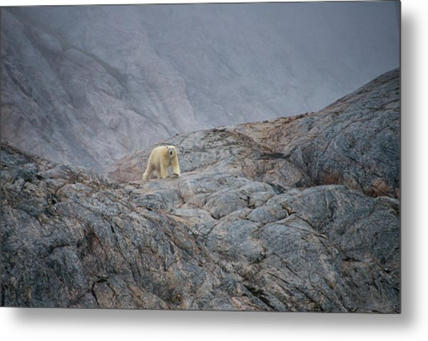 A Curious Polar Bear Approaching A Boat Metal Print