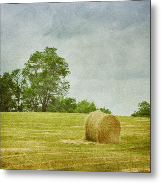 Metal Print featuring the photograph A Day At The Farm by Kim Hojnacki