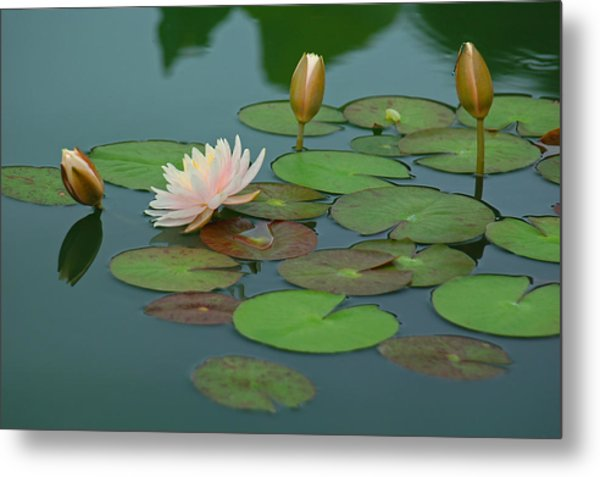 A Day At The Lily Pond Metal Print