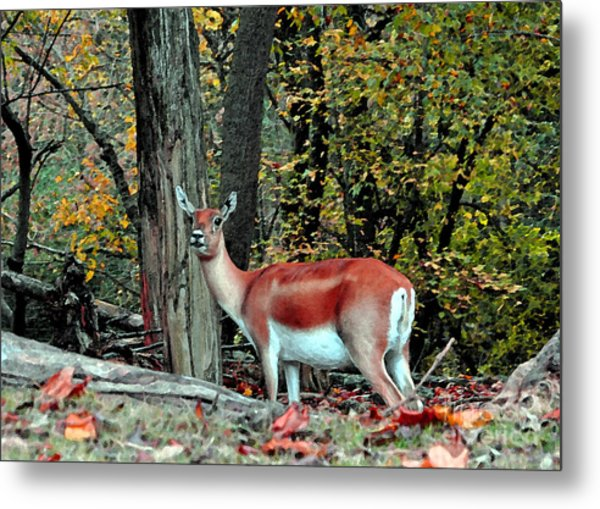 A Deer Look Metal Print