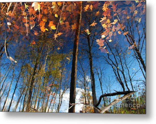 A Different Side Of Autumn Metal Print