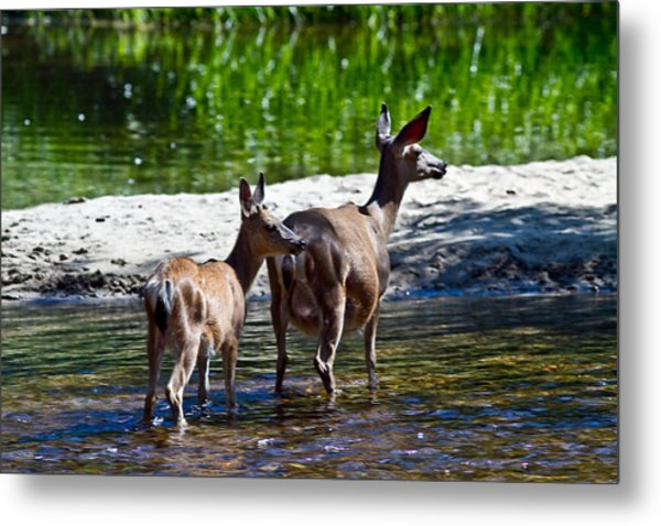 A Doe And Fawn Metal Print