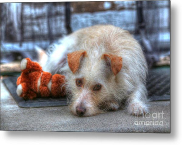 A Dog And His Best Friend Metal Print