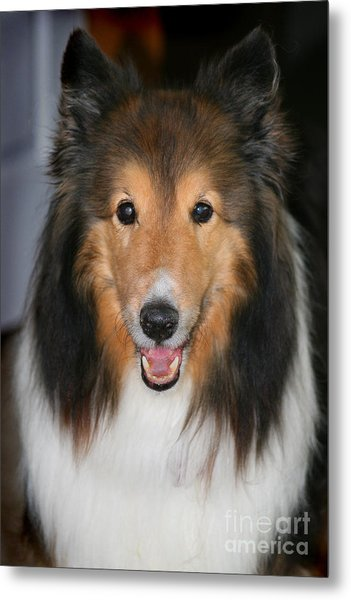A Dog Named Beau Metal Print